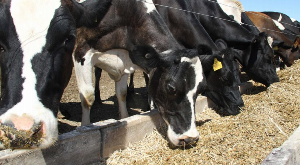 Effects of Trigestamace® Supplementation on Performance of Early-Lactation Dairy Cows